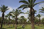 Israel, Tel Aviv. Palm trees in Hayarkon park