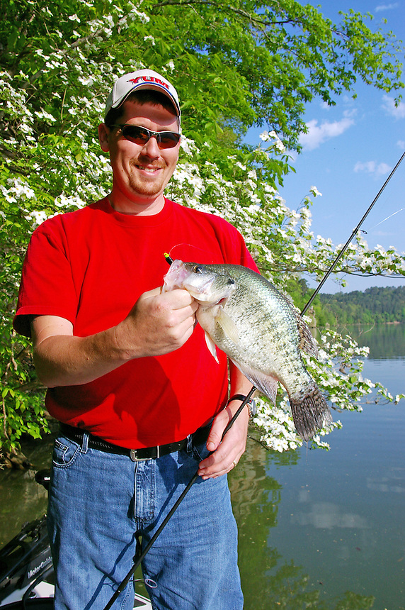 Angler with big crappie on Lake Dardanelle, Arkansas with dogwoods in background