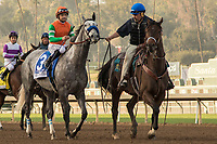 ARCADIA, CA  DECEMBER 26: #3 Unique Bella, ridden by Mike Smith, in the post parade of the La Brea Stakes (Grade l), on December 26, 2017, at Santa Anita Park in Arcadia, CA. (Photo by Casey Phillips/ Eclipse Sportswire/ Getty Images)