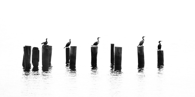 An intimate view of birds on an old dock this winter morning on the St. John's River.