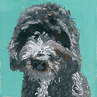 Painting of gray Barbet dog