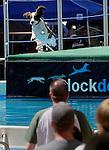 Wild Bill Days - Dock Dogs