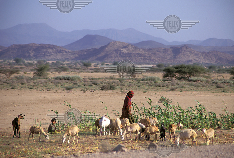 Female goat herder with her flock.
