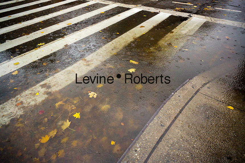 A curbside puddle, clogged from a storm drain filled with the remains of colorful fall foliage, in the Chelsea neighborhood of New York on Tuesday, November 15, 2016. Much needed heavy rain hit the city this morning clogging drains and causing hard to maneuver puddles with leaves and other detritus. (© Richard b. Levine)