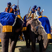 ANANDPUR SAHIB, INDIA - March 06, 2015: Nihangs, or &quot;Sikh warriors&quot; arrive on elephants, to a field where other Nihang Sikh 'warriors' will perform Gatka (mock encounters with real weapons), tent pegging and bareback horse-riding during Hola Mohalla celebrations on March 06, 2015 in Anandpur Sahib, India. Hola Mahalla or simply Hola is a Sikh event, which takes place on the first of the lunar month of Chet, which usually falls in March, and sometimes coincides with the Sikh New Year. It was started by Guru Gobind Singh the tenth Sikh guru in 1701 AD. Hola Mohalla is a three day Sikh festival, in which Nihang Sikh 'warriors' perform Gatka (mock encounters with real weapons), tent pegging and bareback horse-riding, which usually falls in March coinciding with or following the Hindu festival of Holi. <br /> Daniel Berehulak for The New York Times