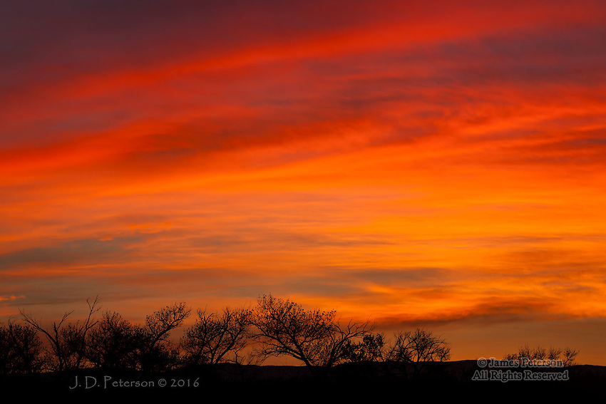 Winter Sunrise, Bosque del Apache, New Mexico ©2016 James D Peterson.  Bosque del Apache is, of course, a National Wildlife Refuge, and one goes there expecting to photograph birds (of which there  is a multitude).  But this is, after all, New Mexico, so the sunrises and sunsets are hard to resist.