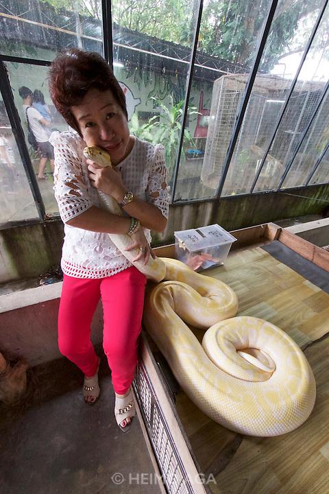 Malaysia, Penang. Snake Temple. Albino python.
