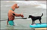 Surfing with your pooch competition.