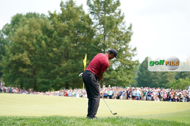 Tiger Woods (USA) chips on the 7th hole during the final round of the 100th PGA Championship at Bellerive Country Club, St. Louis, Missouri, USA. 8/12/2018.<br /> Picture: Golffile.ie | Brian Spurlock<br /> <br /> All photo usage must carry mandatory copyright credit (© Golffile | Brian Spurlock)