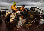 Lee and Rob, working on the 'Othniel Oysters' harvesting barge, Poole Harbour, U.K.<br />