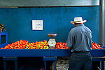 Costa Rica / Cartago / Mercado Muncipal de Cartago / Fruit and Vegetable Market / Tomatoes