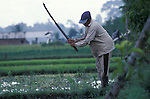 Rice Farmer Working in Field, Bali, Indonesia
