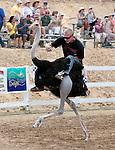Daniel Jacobsen races on an ostrich during media day at the International Camel Races in Virginia City, Nev., on Friday afternoon, Sept. 7, 2012. The 53rd annual event continues Saturday at 1 p.m. and at noon on Sunday..Photo by Cathleen Allison