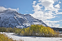 Golden Aspens and Vime Peak,  Waterton Lakes National Park