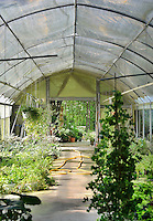 Inside a horticultural greenhouse with a domed roof.