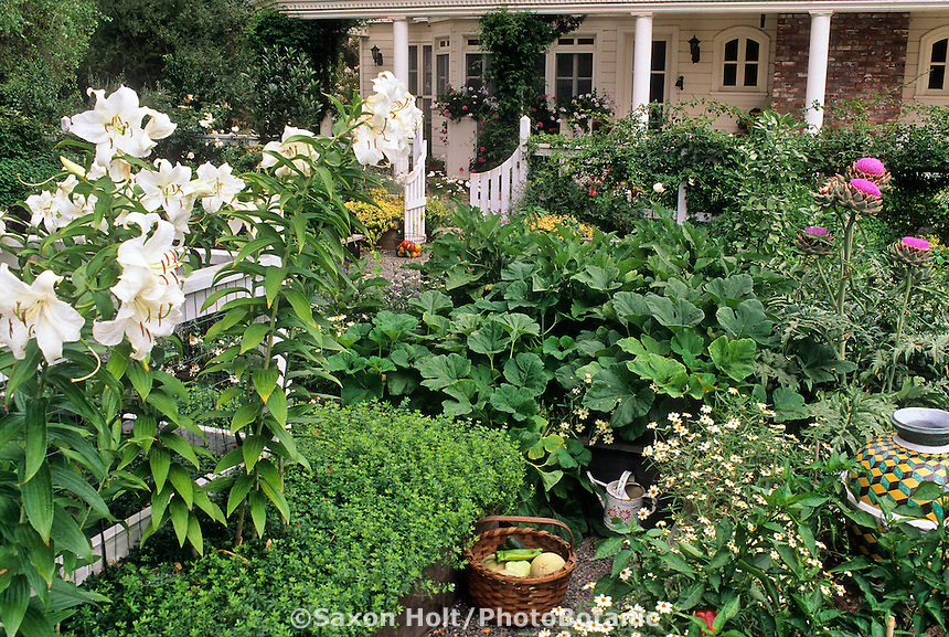 Lilies, Artichoke and ornamental urn in colorful mixed vegetable and herb kitchen garden