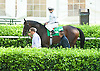 Dark Nile before The Our Mims Stakes at Delaware Park on 6/8/16