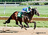 The Great Gonzo winning at Delaware Park on 9/28/13