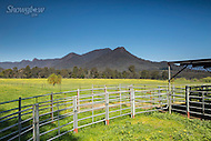 Image Ref: YR111<br /> Location: Cathedral Ranges State Park<br /> Date: 4th Oct 2015
