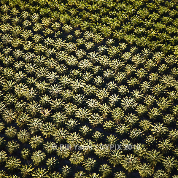 Palm Tree Farm South Florida helicopter aerial