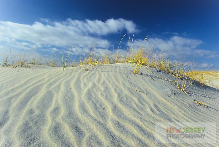 Sand Dune erosion,  Island Beach State Park, New Jersey
