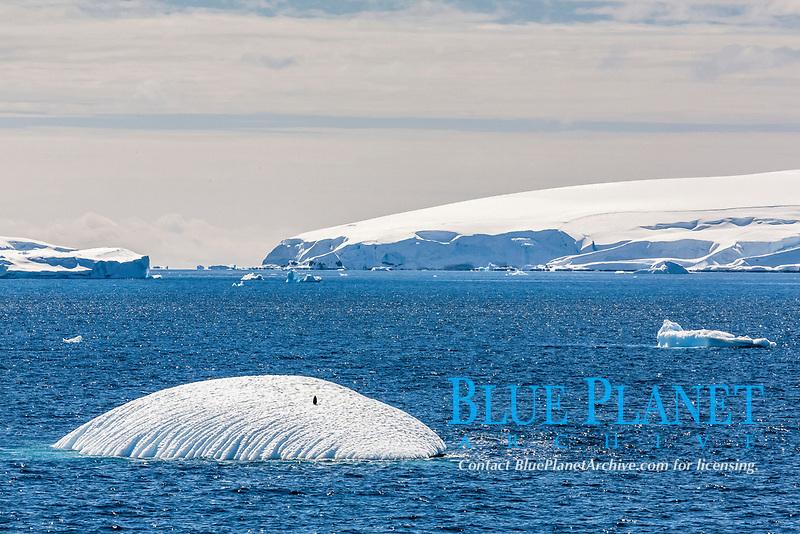 iceberg with a lone penguin near Snow Island, South Shetland Islands, Antarctic Peninsula, Southern Ocean