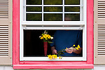 Mature woman cutting flowers and arranging them in window