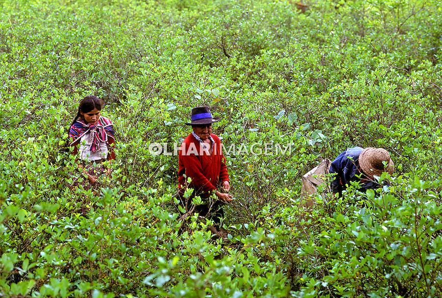 Plantação de coca. Bolivia. 1992. Foto de Salomon Cytrynowicz.