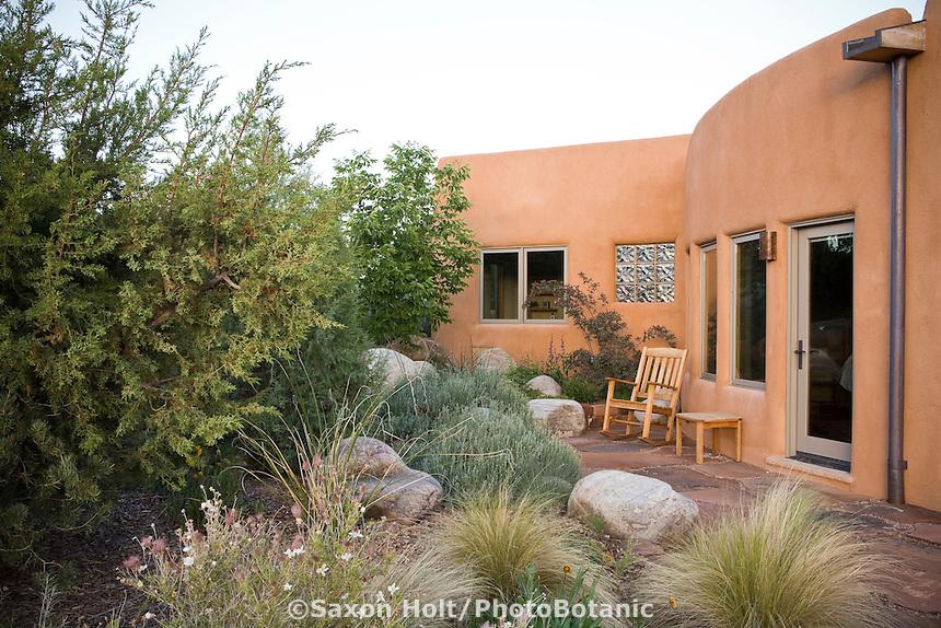Juniperus monosperma, One-seed Juniper shrub windbreak privacy shelter for patio in New Mexico xeriscape, dry landscape, drought tolerant garden