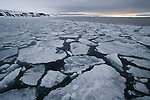 Ocean covered with pack ice, midnight, June, Svalbard, Norway