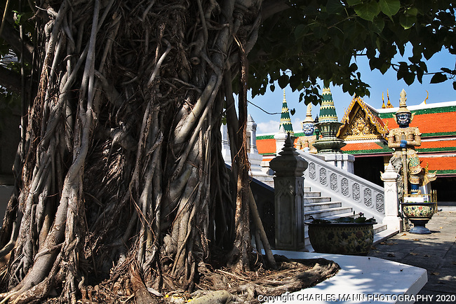 A large Bodhi tree in the courtyard of the Grand Palace in Ko Rattanakosin in downtown Bangkok is guarded by fierce demons.