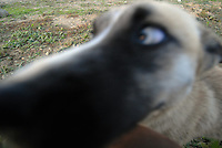 un cane. a dog