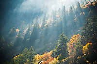 Autumn light on forest, Blue Ridge Parkway