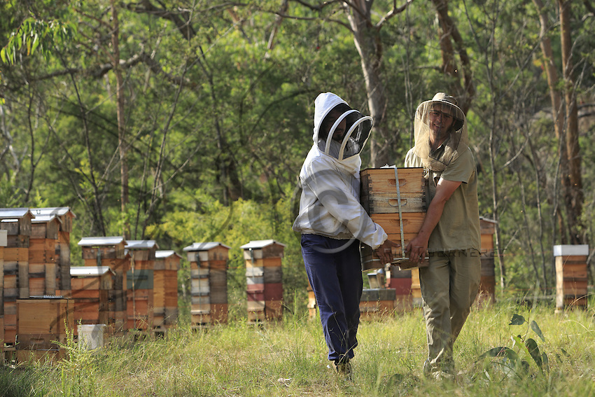 Tim Malfroy, 32 years old, during the harvest of the hives. Once taken out of the hives, the honey chambers are transported by vehicle.///Tim Malfroy, 32 ans pendant la récolte des ruches. Les hausses sont transportées.