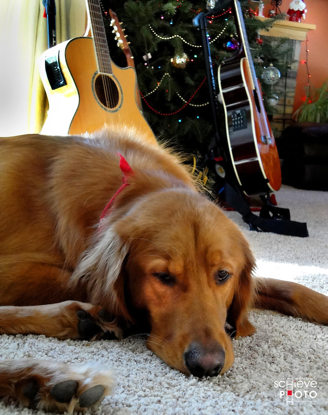 Dogs sleep an average of 20 hours a day.