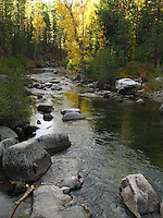 Golden leaves reflect in a stream along Highway 108, the Sonora Pass Highway.