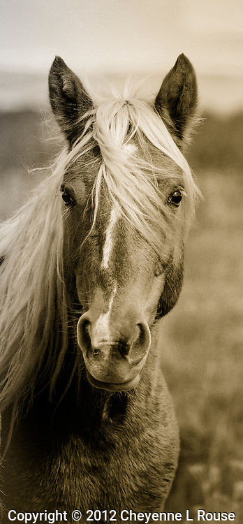 Wild Palomino in New Mexico<br />