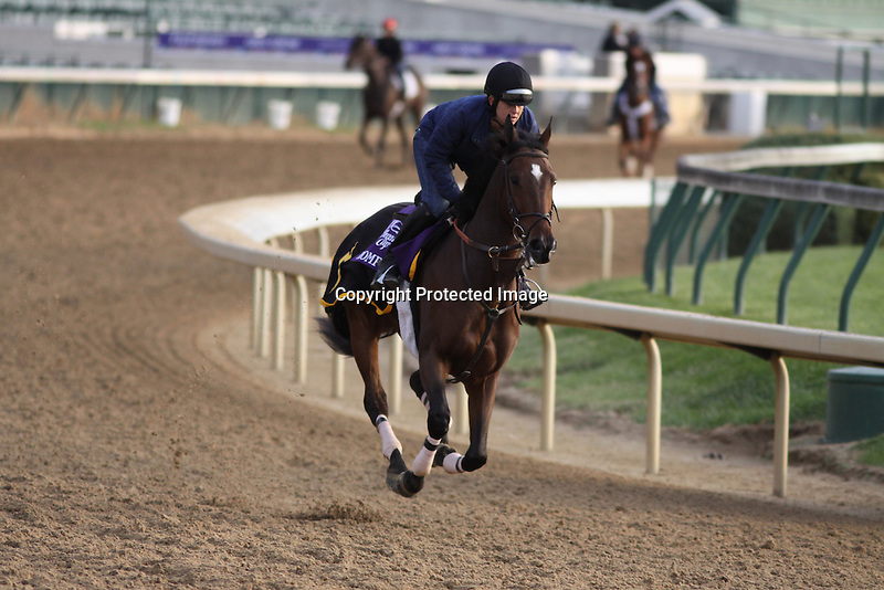 Romp works in preparation for The Breeders' Cup at Churchill Downs. 11.02.2010..photo Ed Van Meter