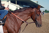 Horse racing; racehorse; Thoroughbred; racetrack, Forty Niner, Woody Stephens, Belmont Park, Belmont Stakes, Claiborne Farm