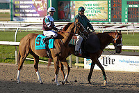 January 17, 2015:  Villandry (KY) with Florent Geroux in the Col. E.R. Bradley Handicap at the New Orleans Fairgrounds course. Steve Dalmado/ESW/CSM