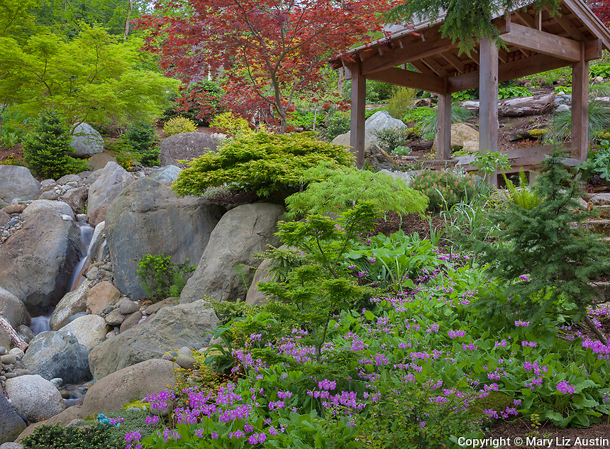 Vashon-Maury Island, WA: Covered seating area overlooks a woodland perennial garden and waterfall in spring
