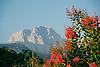 The mountain Mig Dia with Bougainvilleas in foreground<br /> <br /> La montaña Mig Dia con Bougainvilleas en primer plano<br /> <br /> Der Berg Mig Dia mit Bougainvilleas im Vordergrund<br /> <br /> 1840 x 1232 px