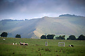 23/08/16<br /> <br /> J R Gilan, from Bosley's dog Bob.<br /> <br /> A foggy morning delayed the start of the 64th Dovedale Sheep Dog Trials today. But the sun soon shone through for some hot competition at  the two-day annual event near Ashbourne in the Derbyshire Peak District.<br /> <br /> All Rights Reserved, F Stop Press Ltd. +44 (0)1773 550665