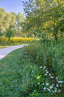A limestone gravel trail runs through concentrations of wildflowers at Rock Run Forest Preserve in Will County, Illinois