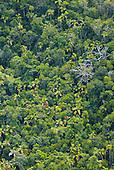 Palmiers Chambeyronnia, chaîne centrale