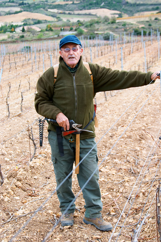 Monsieur Astruc tending to his vines. Mont Tauch Cave Cooperative co-operative In Tuchan. Fitou. Languedoc. Vines trained in Cordon royat pruning. Man pruning vines. France. Europe. Vineyard.