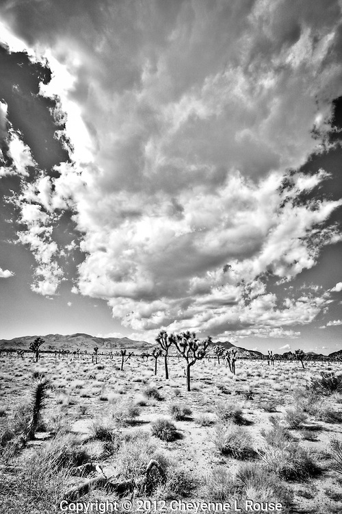 &quot;Big Sky Big Clouds&quot; - Joshua Tree NP, CA in Black &amp; White<br />