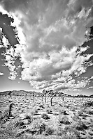 """""""Big Sky Big Clouds"""" - Joshua Tree NP, CA in Black & White<br /> All Rights Reserved"""