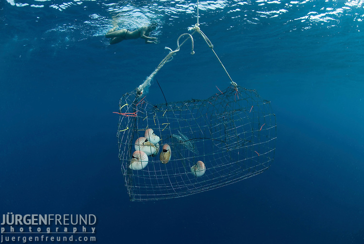 Nautilus brought up from 300 metres for nautilus research with Dr. Billy Sinclair, guest Claudia and John Rumney looking at the cage with the 6 caught nautilus.