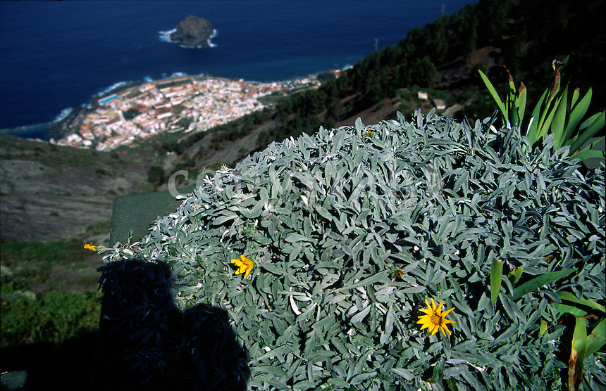 Yellow flowers an the view of the city of Garachico from the mountain in Tenerife, Canary Islands, Spain, Europe